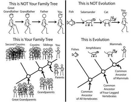 Stick Evolution